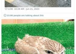 Enlace a Fotos de búhos durmiendo boca abajo