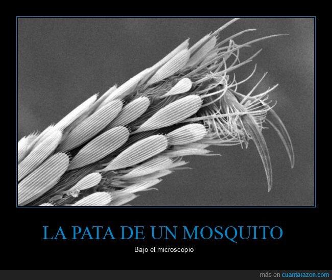 miscroscopio,mosquito,pata