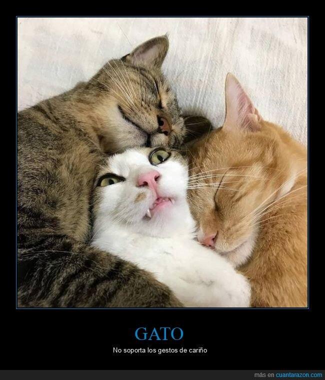 agobio,cara,gatos