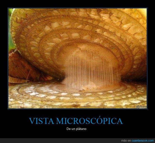 microscopio,plátano,wtf