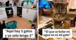 """Enlace a """"Esta es mi casa, pero este no es mi gato"""": fotos que te encantarán si te gustaría que apareciera un gato desconocido en tu casa"""