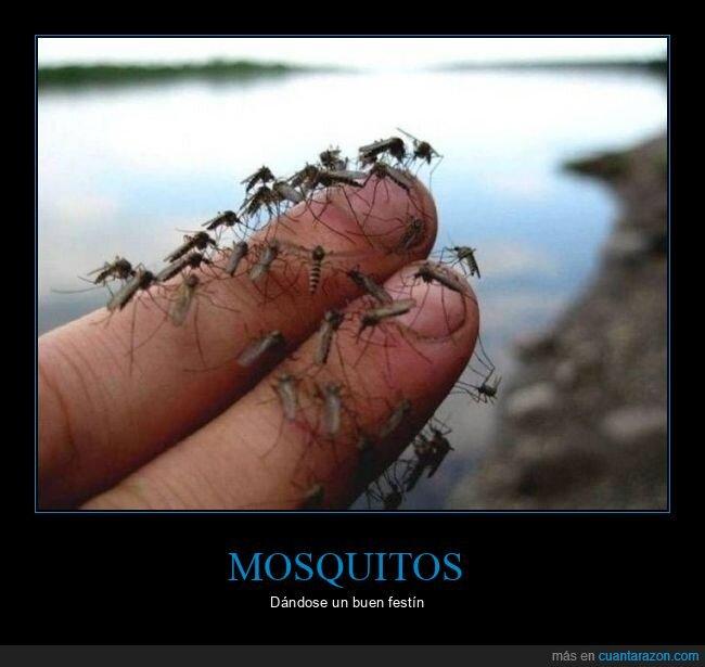 dedos,mosquitos,wtf