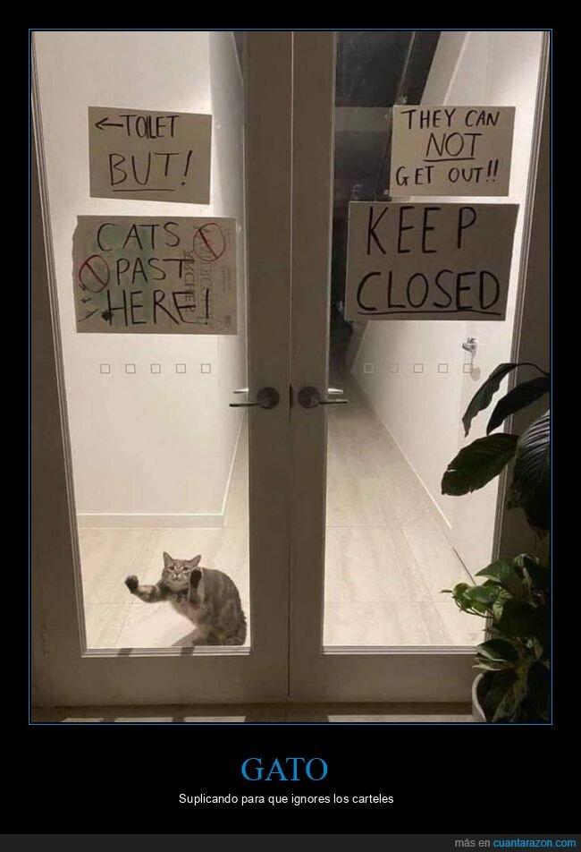carteles,gato,puerta