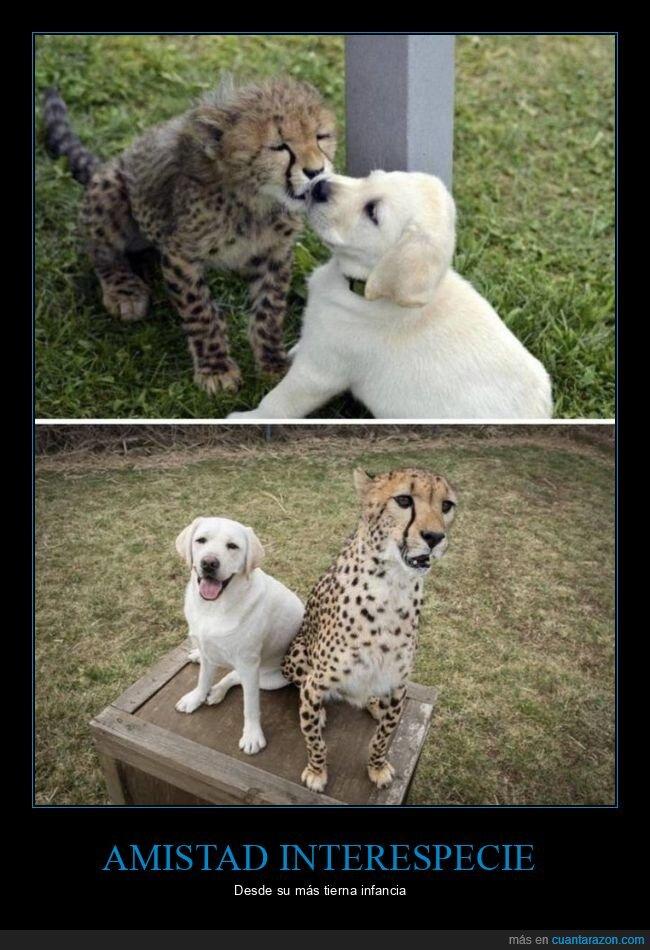 ahora,amistad,antes,guepardo,perro