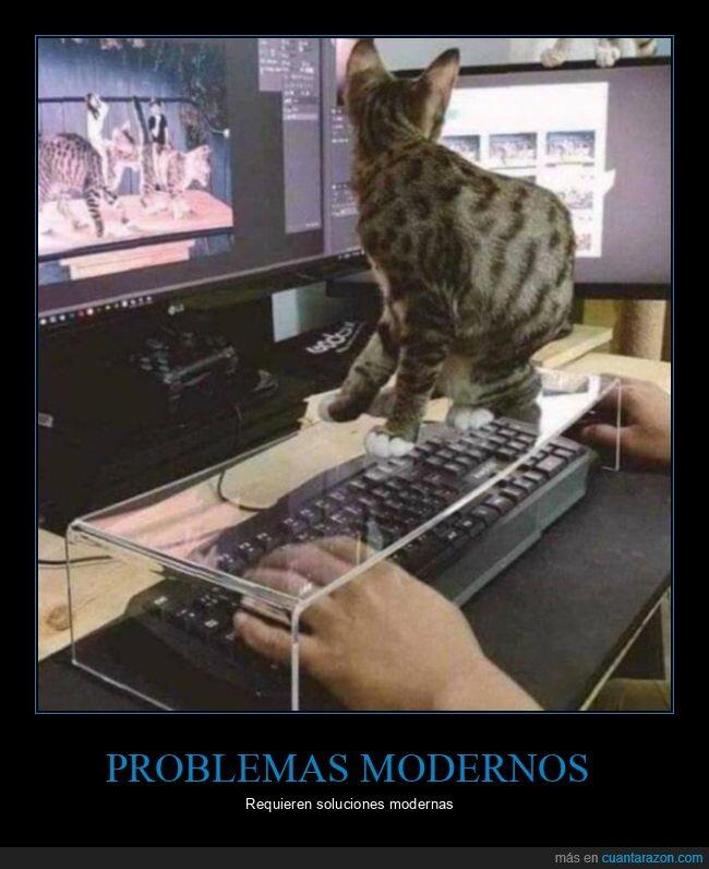 gato,soluciones,teclado