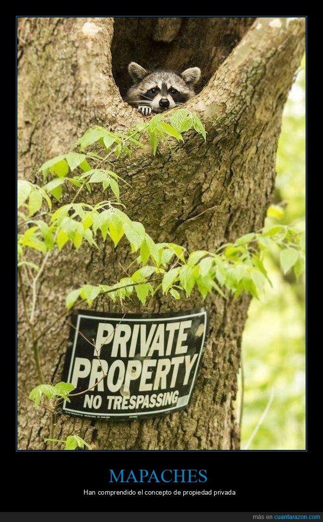 árbol,cartel,mapache,propiedad privada