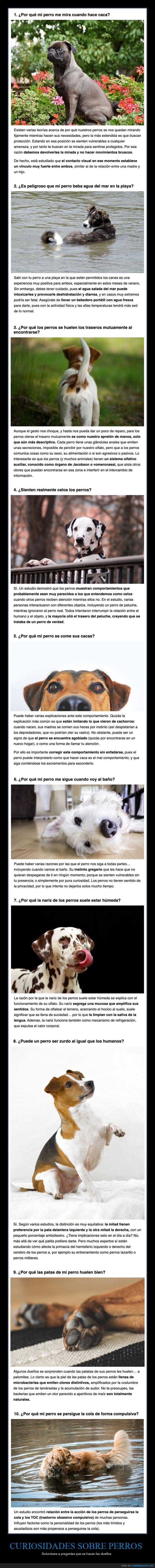 cueriosidades,perros,preguntas,respuestas