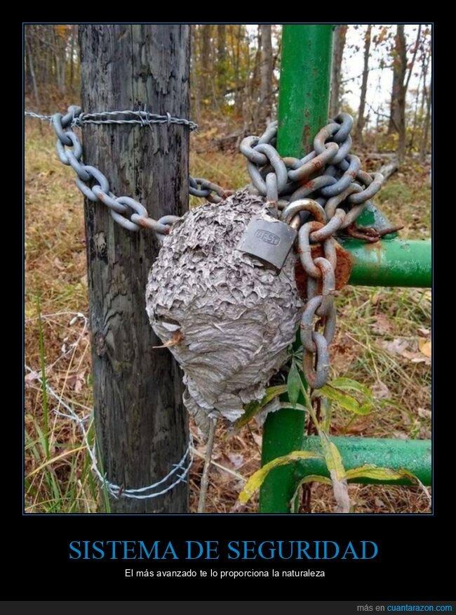 cadena,panal,seguridad
