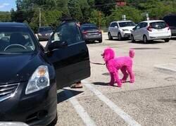 Enlace a Perro tuneado