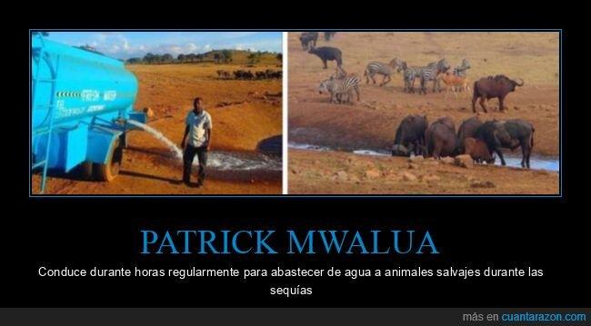 agua,animales,patrick mwalua,sequías