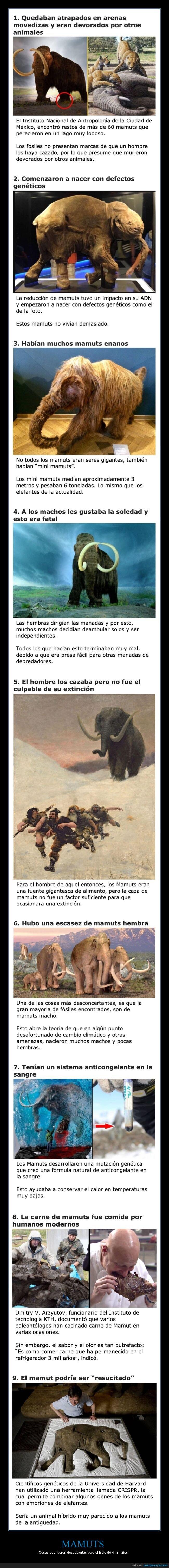 curiosidades,mamuts