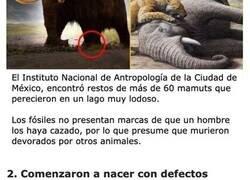 Enlace a Cosas sobre los mamuts que fueron descubiertas bajo el hielo de 4 mil años