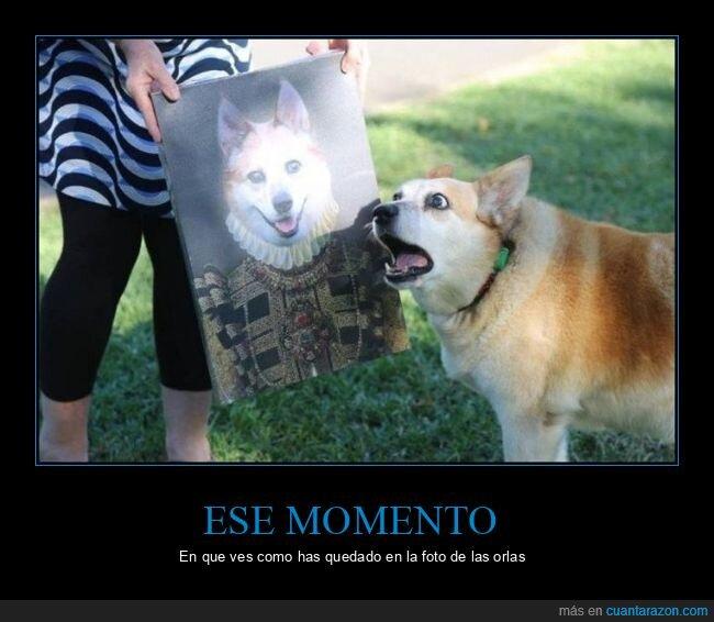 foto,orlas,perro,susto