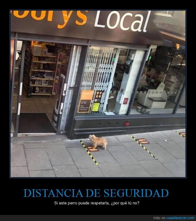 distancia de seguridad,esperar,perro,puerta