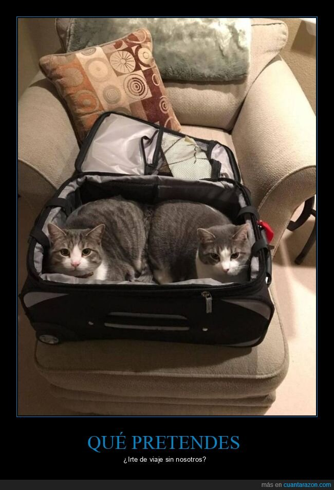 gatos,maleta
