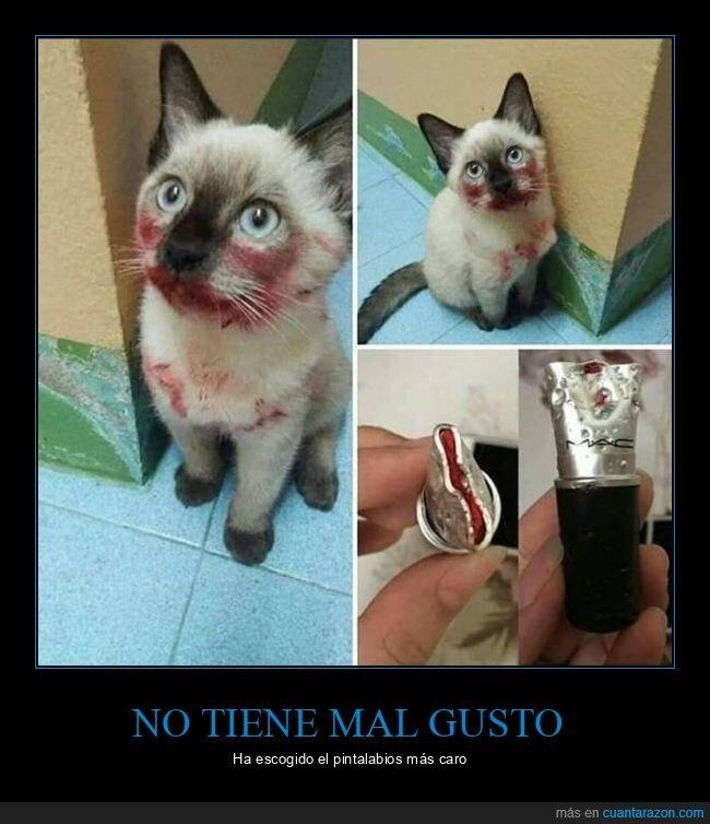 gato,mac,maquillaje,pintalabios,rojo