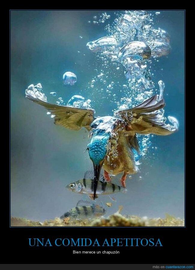 pájaro,pescar,pez,sumergirse