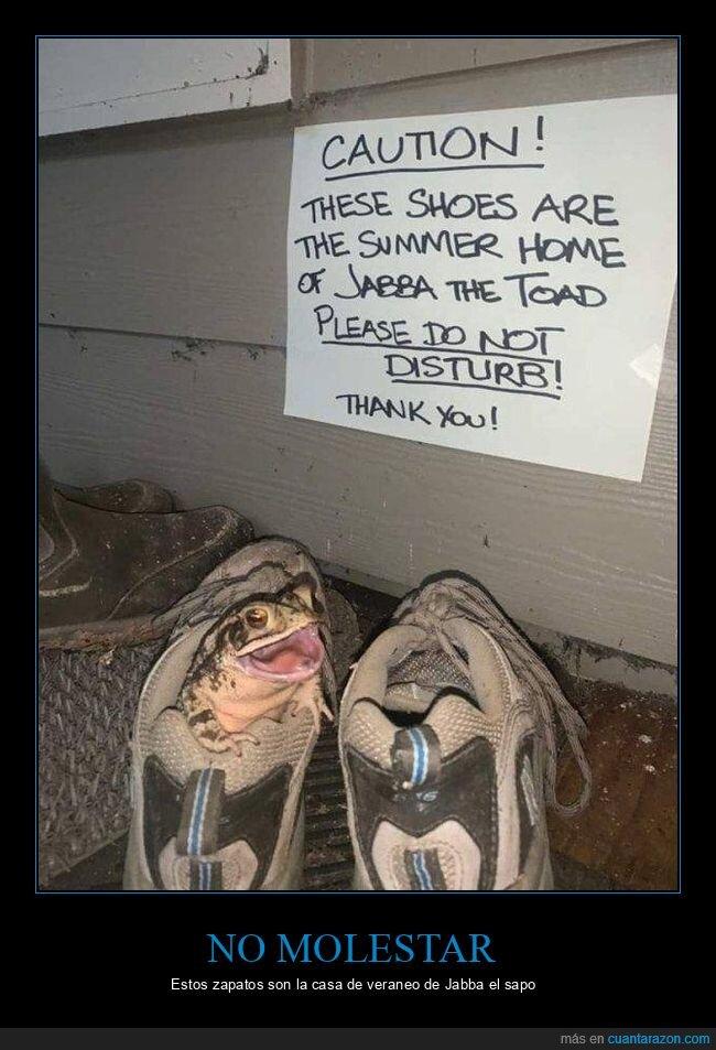 jabba the toad,sapo,zapatillas