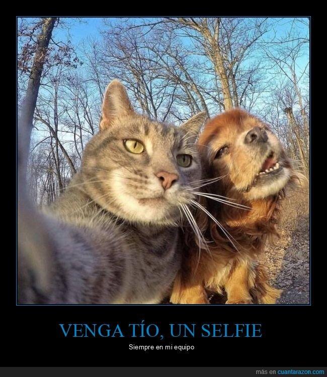 gato,perro,selfie