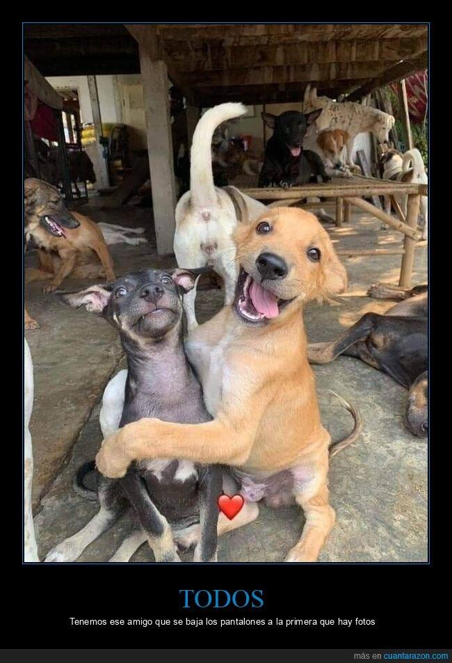 amigos,fotos,perros,selfie