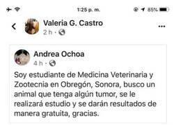 Enlace a Veterinaria en prácticas