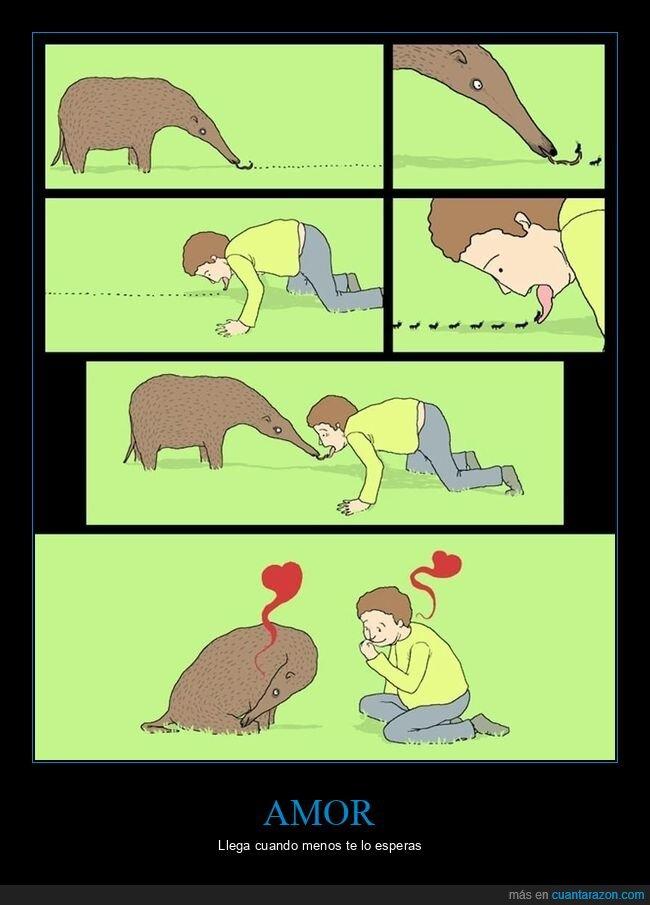 amor,comiendo,hormigas,oso hormiguero