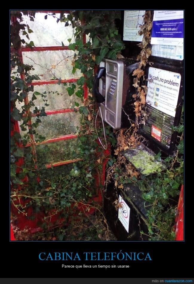 cabina telefónica,plantas,wtf