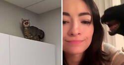 Enlace a Fotos de gatos maullando tan alto que casi puedes oír las imágenes