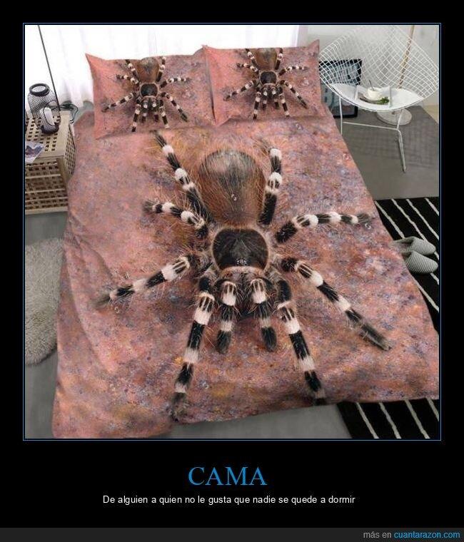arañas,cama,wtf