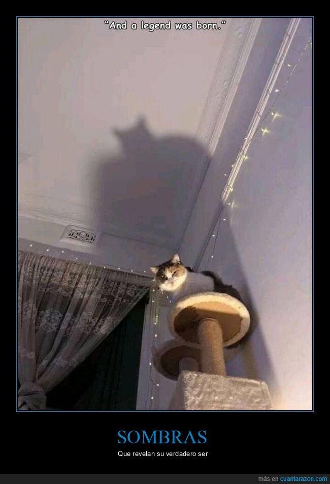 batman,gato,sombra