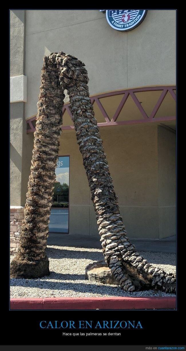 arizona,calor,palmera