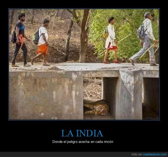 india,tigre,wtf