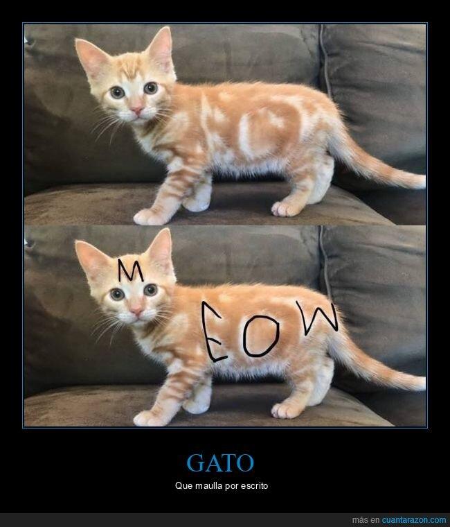 gato,maullido,meow,pelo