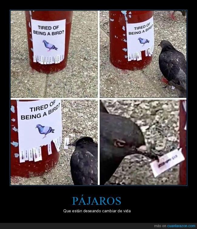cartel,pájaros,wtf