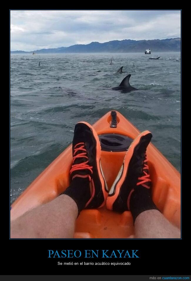 kayak,mar,tiburones,wtf