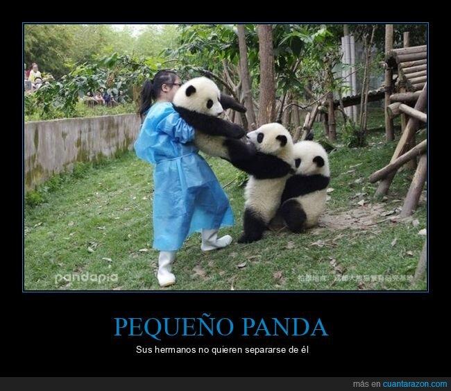 pandas,separarse,sujetando