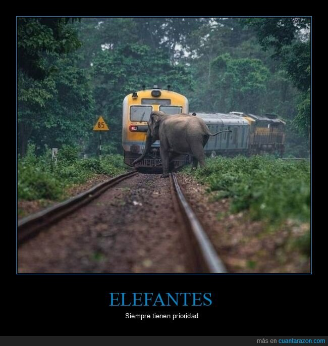 elefante,tren,wtf