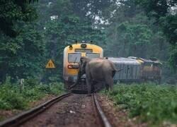 Enlace a Paso de elefantes