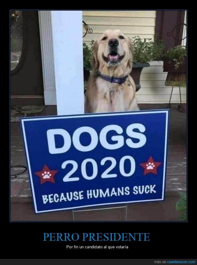 elecciones,perro