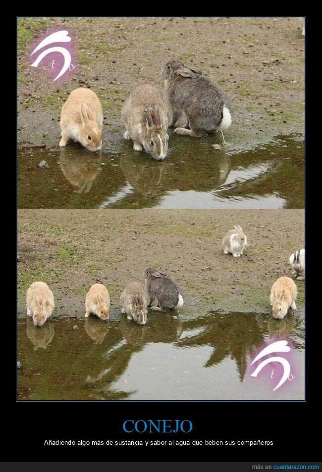 bebiendo,conejos,meando