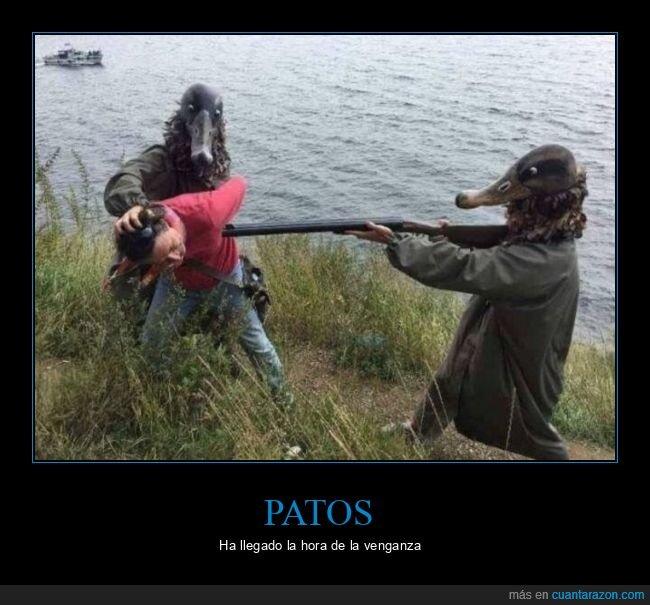 cazador,patos,rifle