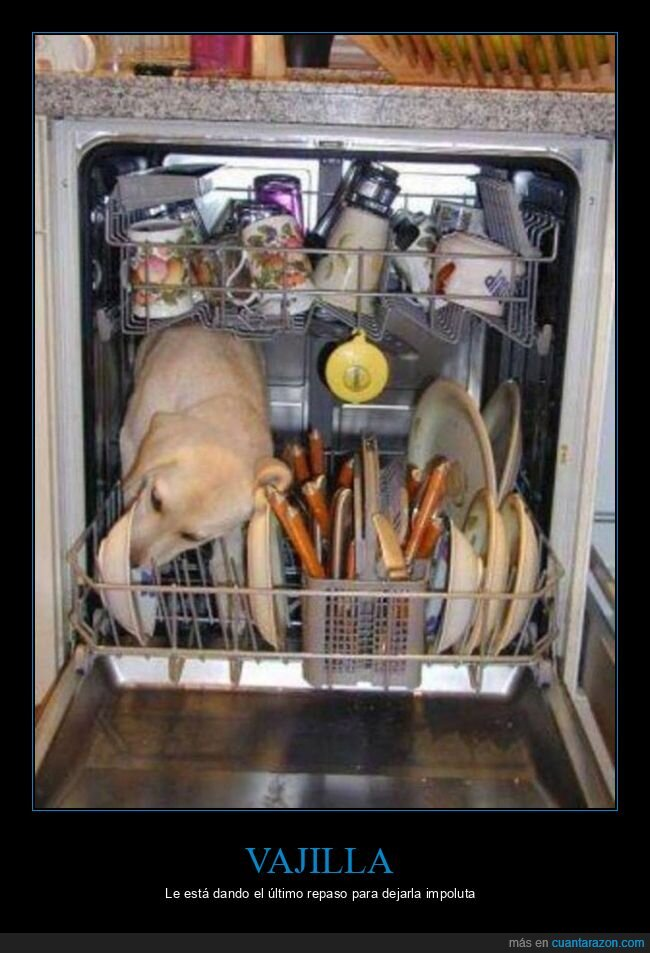 chupando,lavavajillas,perro