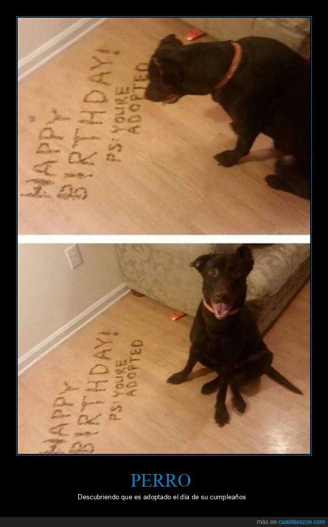 adoptado,cumpleaños,perro
