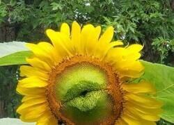 Enlace a Esta flor necesita amor
