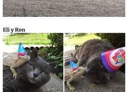 Enlace a Gatos que se encontraron con lagartos y dieron lugar a estas divertidas fotos