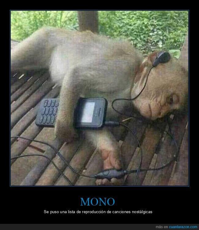 escuchando,mono,móvil,música