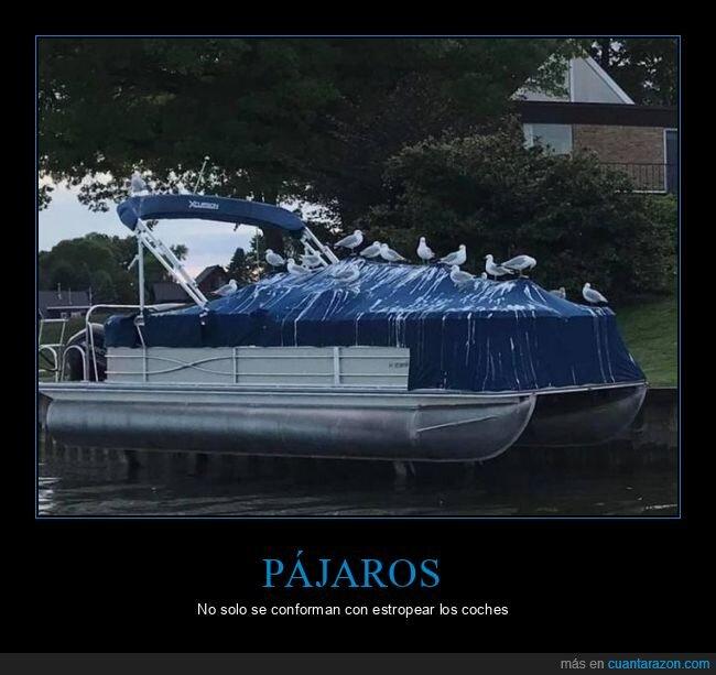 barco,fails,gaviotas