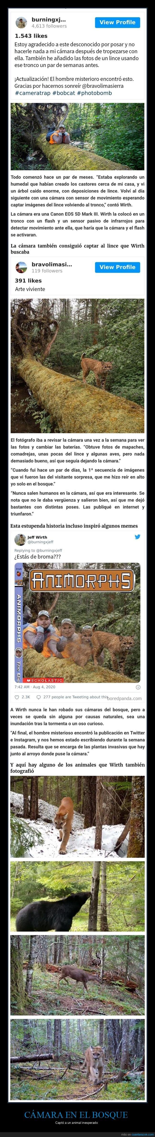 animales,bosque,cámara,humano