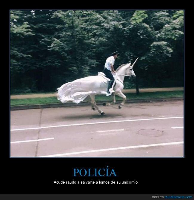 caballo,policía,unicornio,wtf