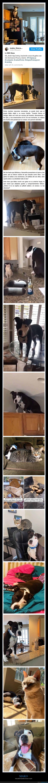 gato,mako,perro,pitbull,rescatado